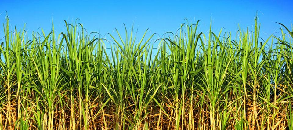 El ministerio de energ a volver a fijar el precio del - Precio de bioetanol ...