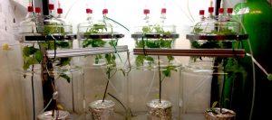 plantas-laboratorio-960