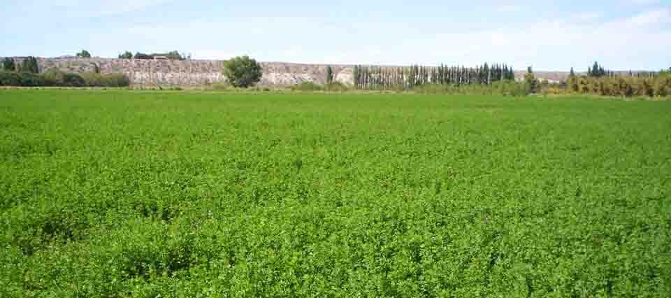 alfalfa-960-426-960-25791
