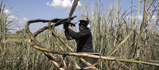 El Senado dio media sanción al proyecto del monotributo de productores cañeros