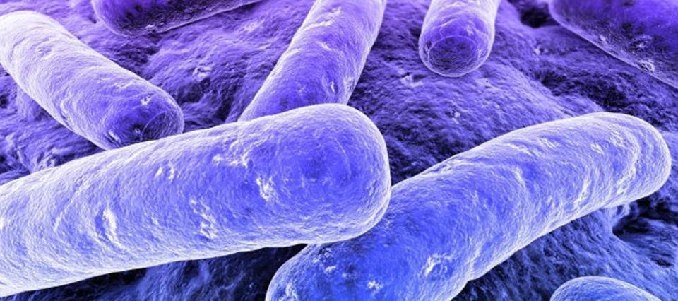 bacterias-960-426-960-26212