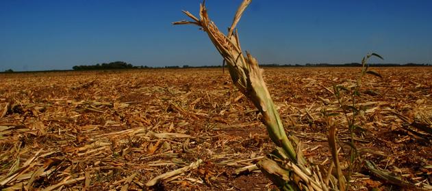 Se esperan dos meses con pocas lluvias y se complica la situación de los cultivos
