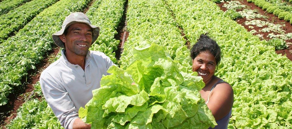 caribe-agricultura-960-426-960-24793