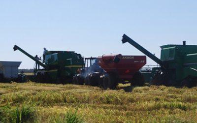 cosecha-de-arroz-631x280-280-631-13532