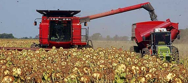 Se cosecharon 530.000 hectáreas de girasol con un rinde medio de 18,6 qq/ha