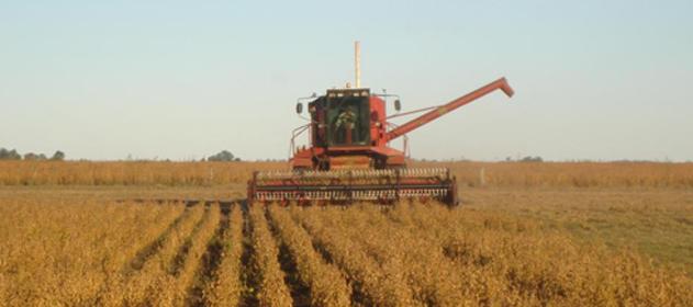 Buen escenario para la siembra de trigo en el centro norte de Santa Fe