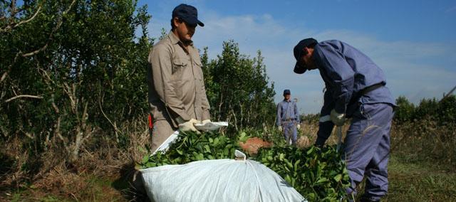 Pequeños productores de yerba y té se capacitan para recibir turistas