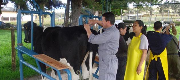 Argentina exportará material genético bovino a Brasil