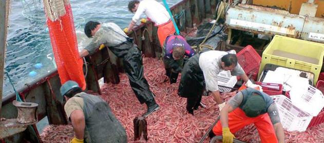 fresqueros-puerto-pescado-631-280-631-26071