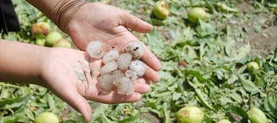 En Córdoba, el granizo dañó el 50% de la producción hortícola