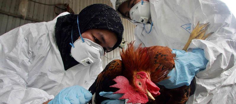 gripe-aviar-631x280-354-797-8514