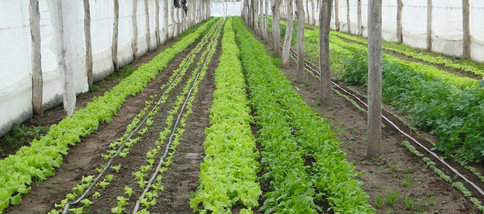 Córdoba apuesta a los pequeños productores y los asiste con maquinaria agrícola