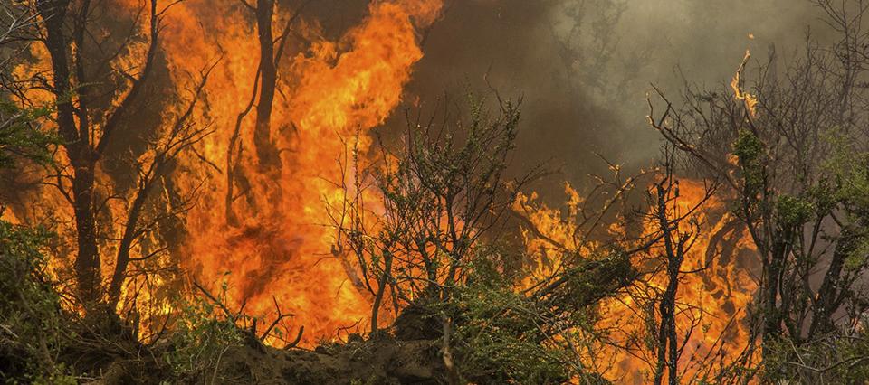 Destinan más de $3 millones para recuperar bosques incendiados en Chubut   Infocampo