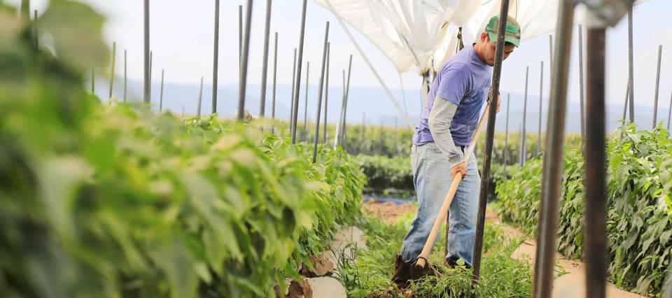 Distribuirán cinco millones de pesos para jóvenes emprendedores rurales