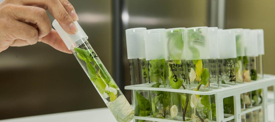 laboratorio-plantas-960-426-960-20356