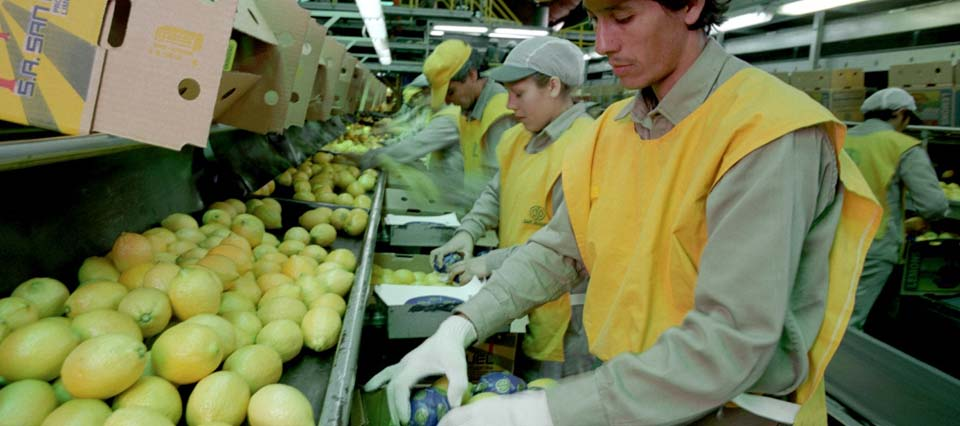 limones-9-960x426-426-960-6629