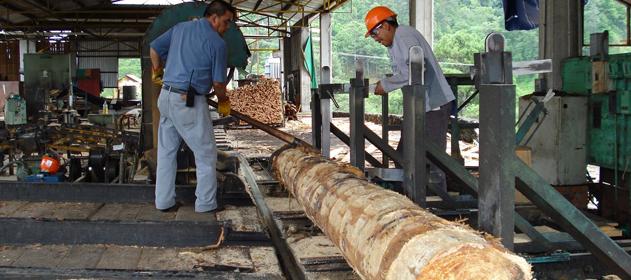 madera-maderera-631-x-280-280-631-3266