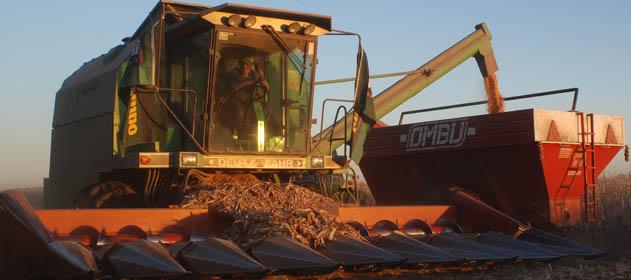 La cosecha de maíz avanza con rendimientos por encima de las expectativas