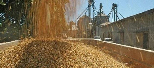 La molienda de soja cayó 5,3 % con respecto a 2016