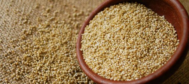 Secuencian el genoma de la quinoa y podría comenzar a cultivarse en regiones sin altura