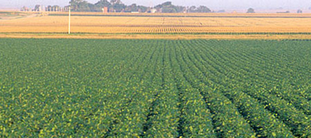 El agua se llevó 600 mil hectáreas de soja en la Zona Núcleo
