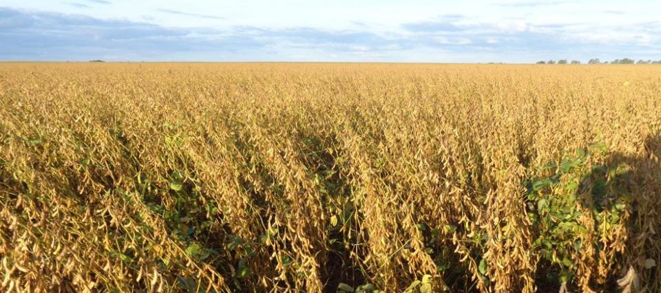 El USDA proyecta una cosecha récord de soja en Estados Unidos