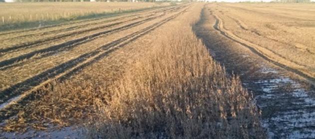 """Para Agroindustria, """"pese a las inundaciones la cosecha superará las 130 Mtn"""""""