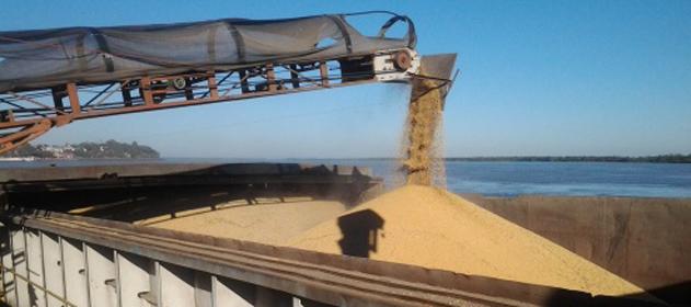 El sector exportador compra 10.7 millones de toneladas de granos en esta campaña