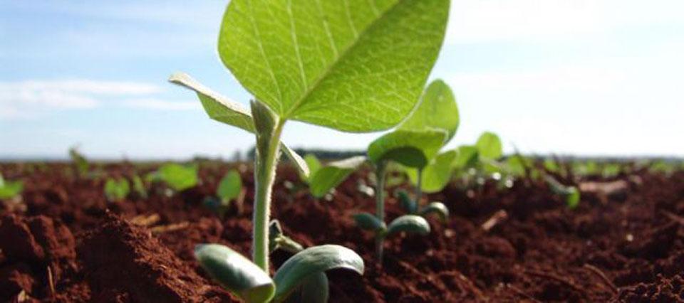 Crece la intención de siembra de soja en el centro norte santafesino