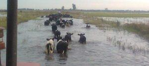 tambo-inundado-631-280-631-18988