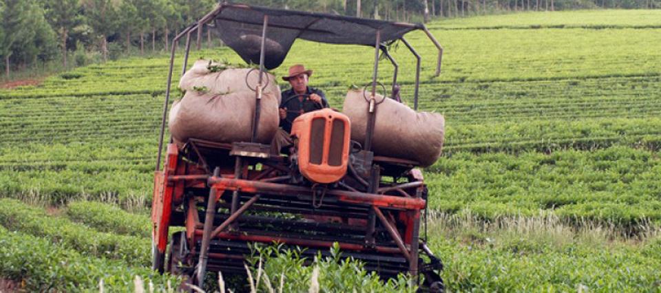 Resultado de imagen para Definirán mañana el precio del té para la nueva zafra en Misiones