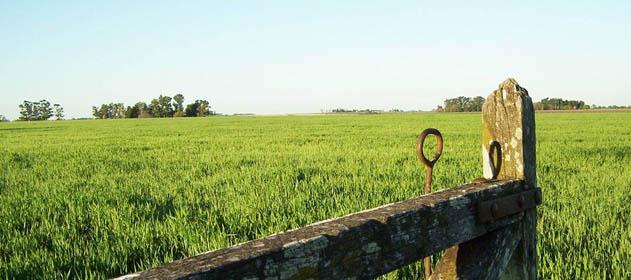 """Aseguran que la actividad del mercado inmobiliario rural """"sigue baja"""""""