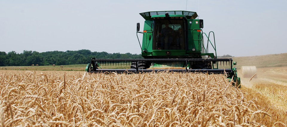 Argentina podría exportar un 15% más de trigo pan que en la campaña anterior
