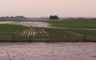 trigo-inundado-960-426-960-20943