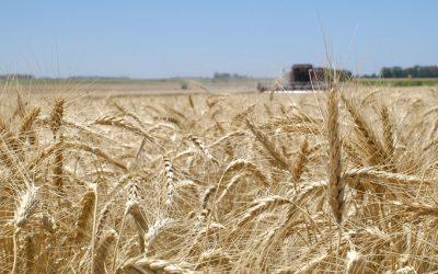 Tecnologías en trigo que superan todos los pronósticos