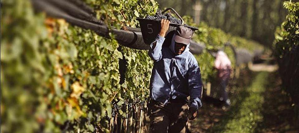En un año, aumentó 14% el costo de producción vitivinícola