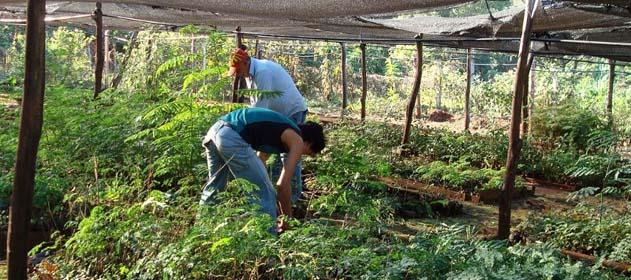 Infocampo neuqu n destinar a proyectos forestales for Viveros en neuquen