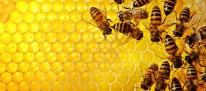 abejas-960