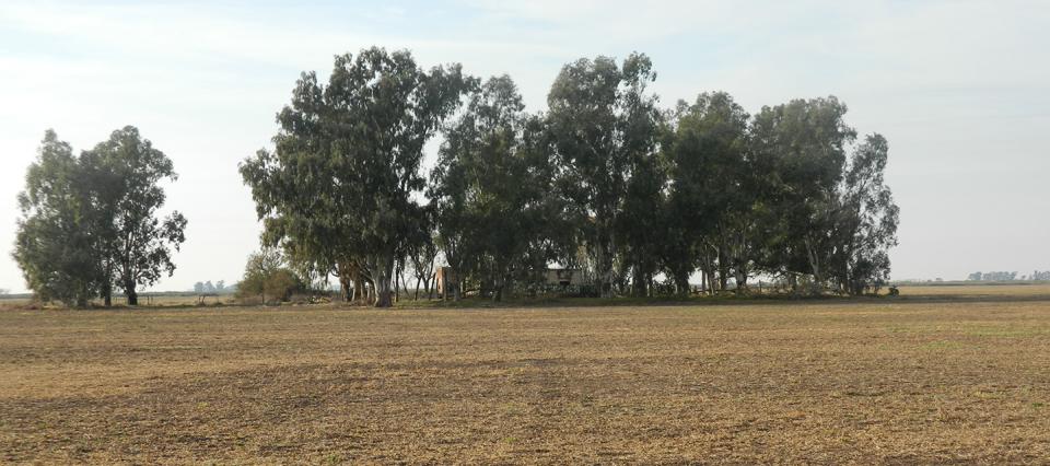 Impulsan una Ley que obligará a productores a forestar el 1% de su campo