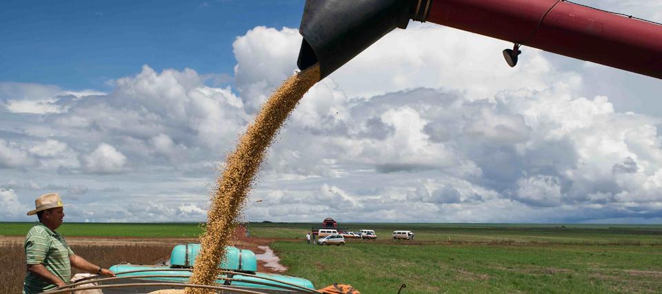 Estiman que aumentará 15,3% la cosecha de granos en Brasil este año