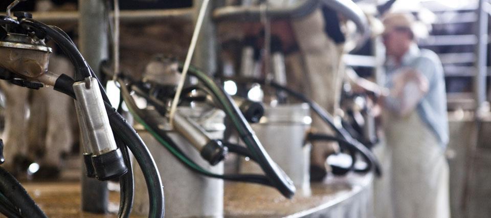 Crean un fondo rotatorio de $7 millones para tamberos e industrias lácteas de Tucumán