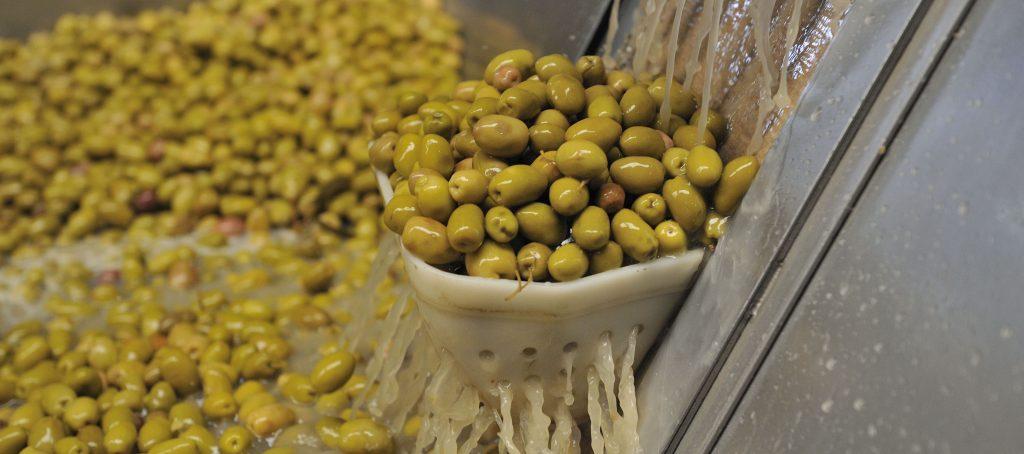 olivicultura-aceituna-960