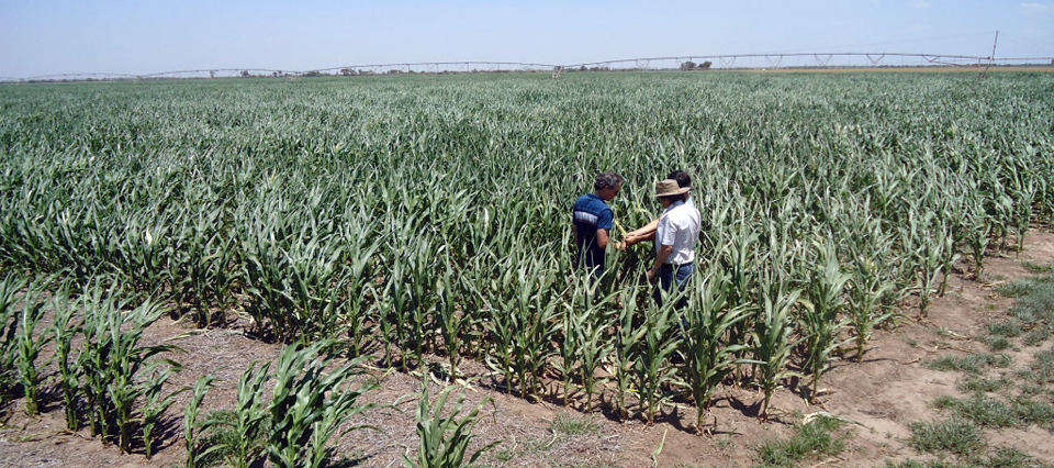 productores-agro
