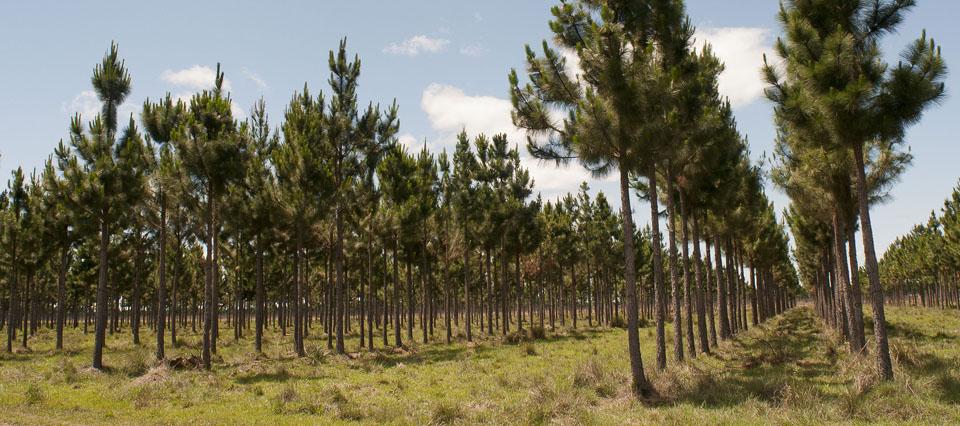 A partir de hoy, el 2% de las superficies agropecuarias deberán tener sí o sí árboles