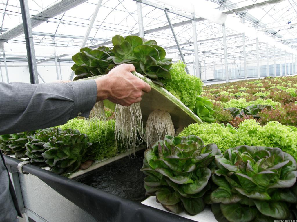 Resultado de imagen de cultivo hidroponico