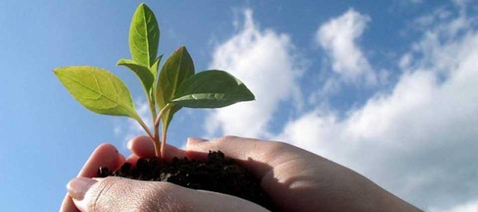 Desarrollaron semillas adaptadas al cambio climático