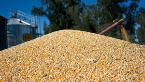 etanol-maiz