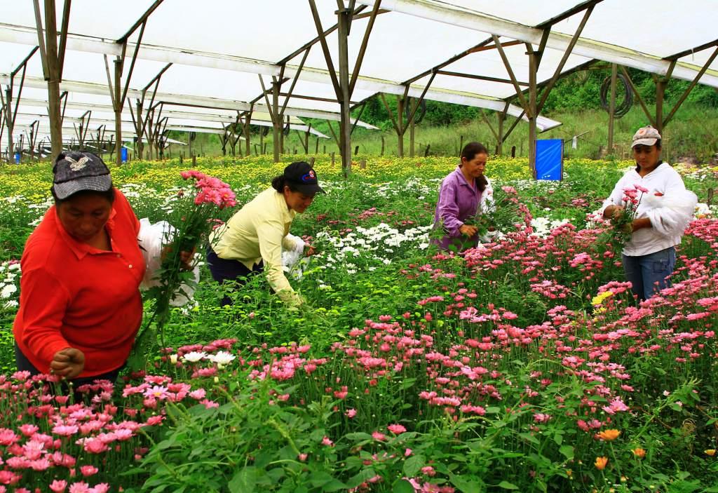 Infocampo Capacitan a productores florícolas de Jujuy para abrir ...