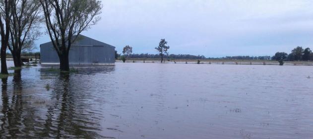 inundaciones-en-campo