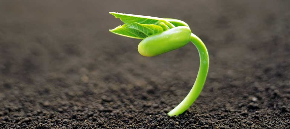semilla-germinando-960